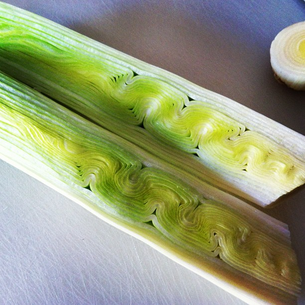 Marla sliced leeks and was delighted with some squiggly nature.